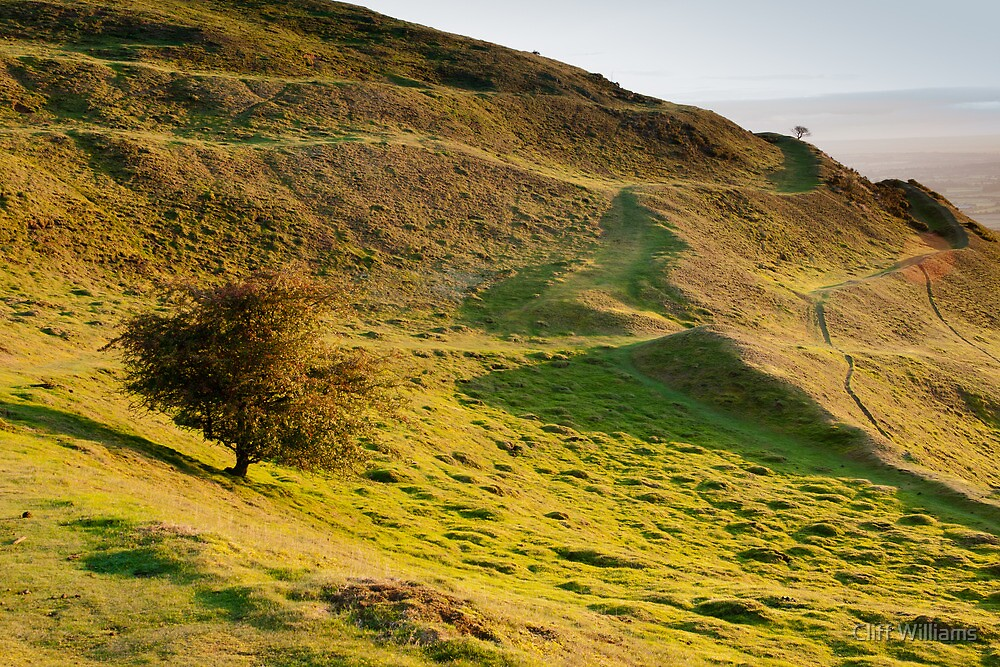 Lone Tree on Hereford Beacon by Cliff Williams