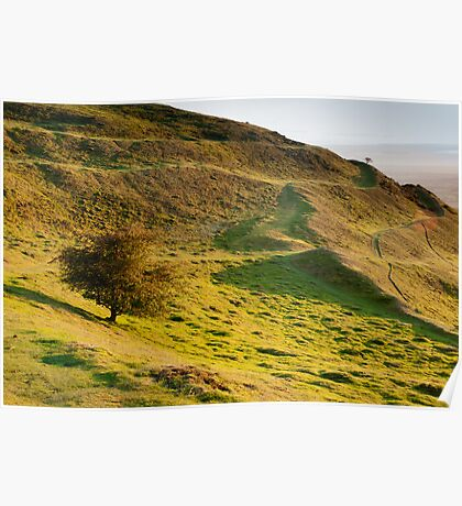 Lone Tree on Hereford Beacon Poster