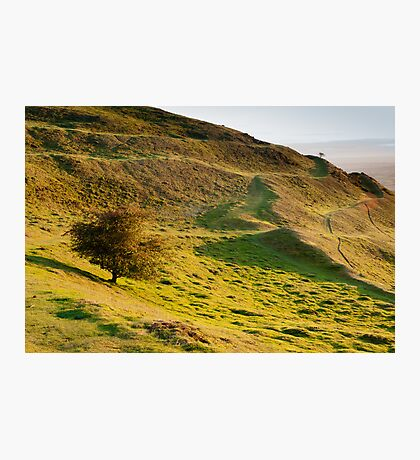 Lone Tree on Hereford Beacon Photographic Print