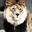 king of the jungle by mohammed