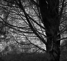 Scary Trees- Black Hill Native Pine by Ben Loveday