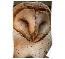 Barn Owl - Close up and personal Poster