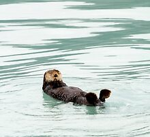 Sea Otter by Walter Quirtmair