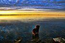 Red Dog Sunset by Carolyn  Fletcher