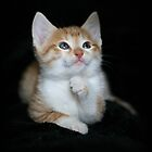 The Thinker Kitty by AngieBanta