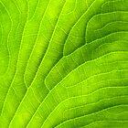 Leaf by Walter Quirtmair