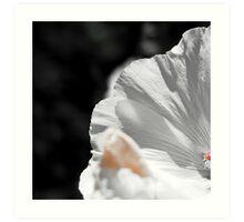 White flower detail Art Print