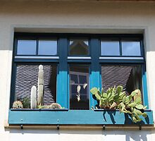 Cacti in the Window by karina5