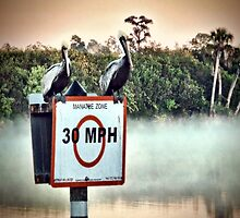 Saint Lucie River Mist by Noble Upchurch