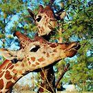 Giraffes by Mattie Bryant