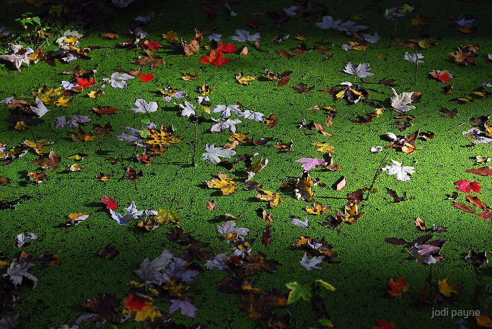 Fall Leaves Floating On Swamp by jodi payne