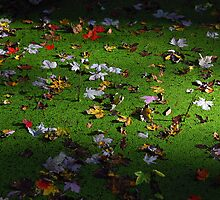 Fall Leaves Floating On Swamp by jodi payne
