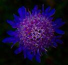 Chaotic Lilac Contumacy by Atılım GÜLŞEN