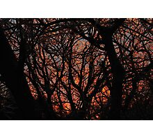 Sunset after Ice Storm Photographic Print