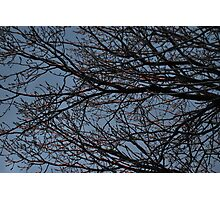 Electric Branches Photographic Print