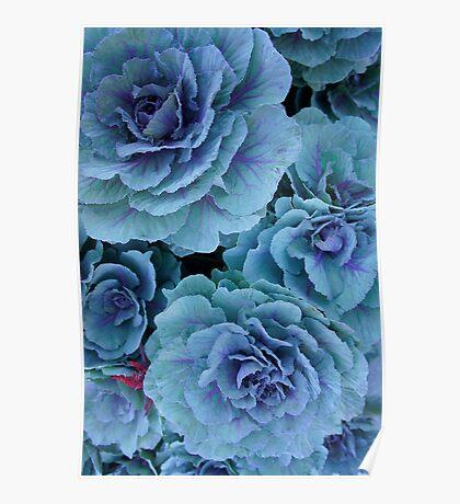 Garden Kale Poster