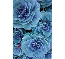 Garden Kale Photographic Print