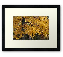 Golden Autumn Parker, IN Framed Print