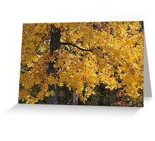 Golden Autumn Parker, IN Greeting Card