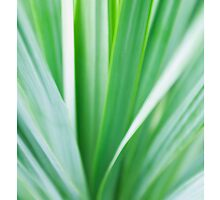Ornamental Grasses Abstract Blur by Tim McGuire