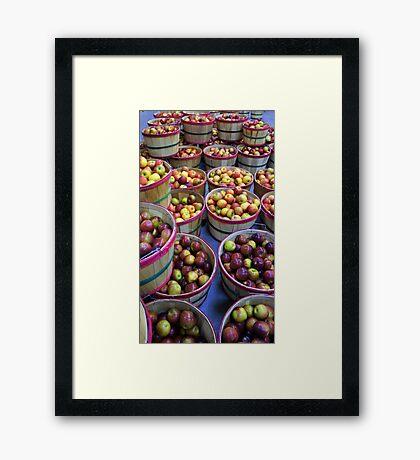 Fall Apples Framed Print