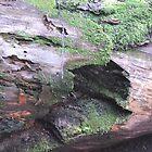 Hole Wood by Tom Dwyer