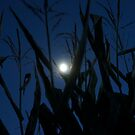 Corn Maze at Midnight by Laurie Perry
