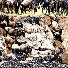 Wildebeest returning to the Serengeti in 2011 by Sheila Smith