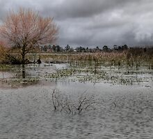 Winter - Lake Wendouree by Barbara  Glover