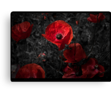 Red red poppy Canvas Print