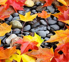 Fall Art prints Colorful Autumn Leaves Rocks by BasleeArtPrints