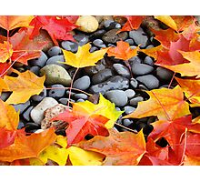 Fall Art prints Colorful Autumn Leaves Rocks Photographic Print
