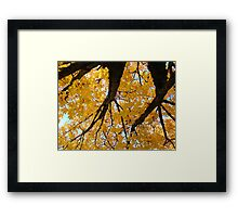 Yellow Autumn Trees prints Golden Fall Leaves Framed Print