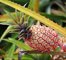 Hawaiian Pineapple by Michael L. Colwell