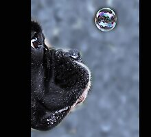 It's A Bubble iPhone by Evita