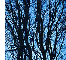 Winter Tree Form, Blue by Tim McGuire