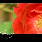 Floral Calendar February by arlain