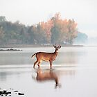 Buck - Ottawa River by Debbie Pinard