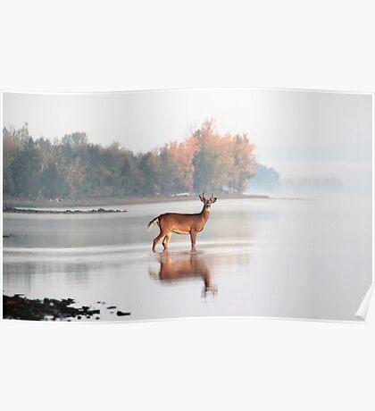 Buck - Ottawa River Poster