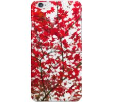 Japanese Maple in Autumn iPhone Case/Skin