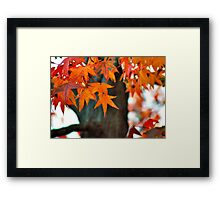 Sweetgum Fall Framed Print