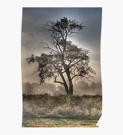 Morning Mist and Elder Tree  Poster