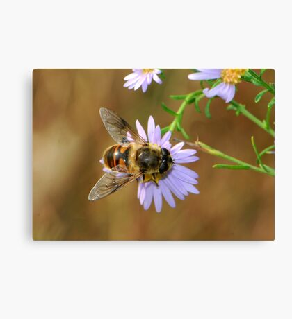 light purple daisy and hoverfly Canvas Print