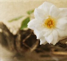 Petite Tree Rose on Driftwood by Lynne Small
