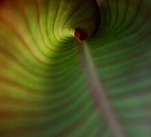 Leaves 3 by Michael  Herrfurth