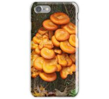 i Jack O' Lantern iPhone Case/Skin