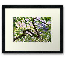 Tree Snake Framed Print