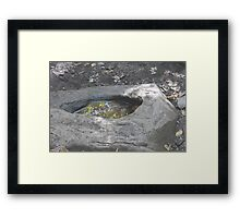 Natures Soup Bowl Framed Print