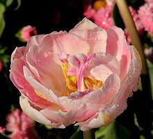 Spring Has Sprung - In the Pink by Sally Haldane