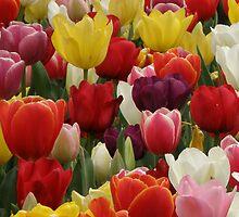 Tulip crazy (iPhone case) by CapturedByKylie